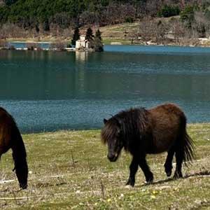 horseriding-(5)