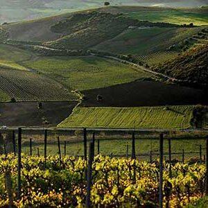 wine-roads-(1)