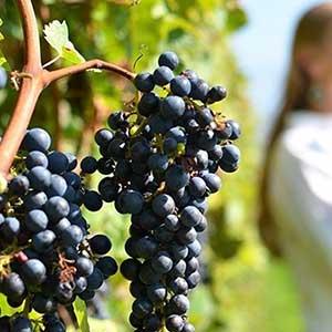 wine-roads-(2)