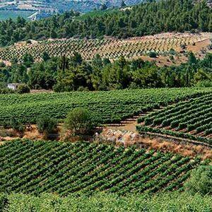 wine-roads-(3)