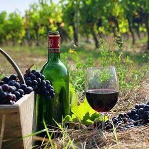 wine-roads-(5)